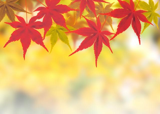 10月より「秋の週2回コース」実施予定です